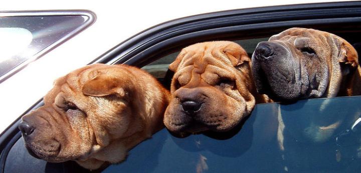 10 consigli per portare il vostro cane in vacanza in auto