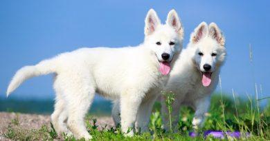 Sei consigli per proteggere i cani dal caldo