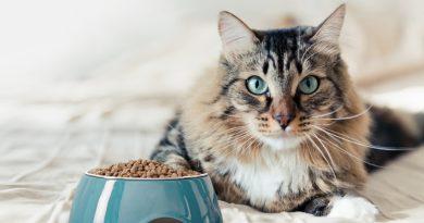 Come leggere le etichette del Pet food