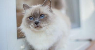 Cosa sapere prima di acquistare un gatto in allevamento