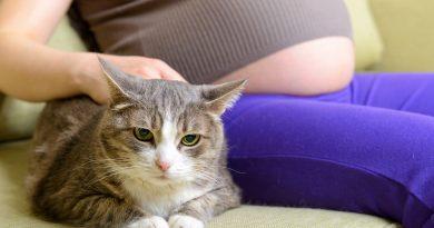 Toxoplasmosi, gatti e gravidanza