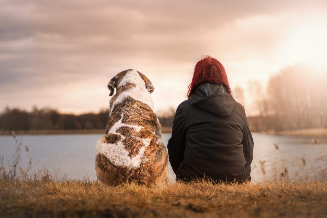 Pet therapy: un rimedio per grandi e piccini