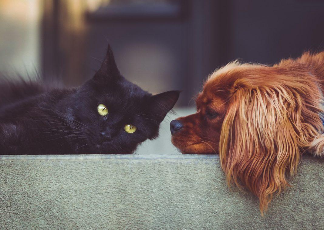 Oasy: cibo di qualità per cani e gatti
