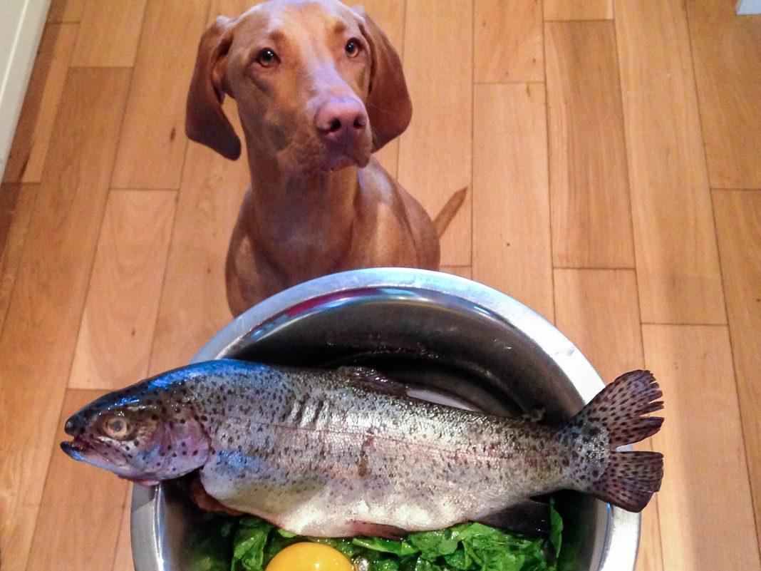 I cani possono mangiare pesce?