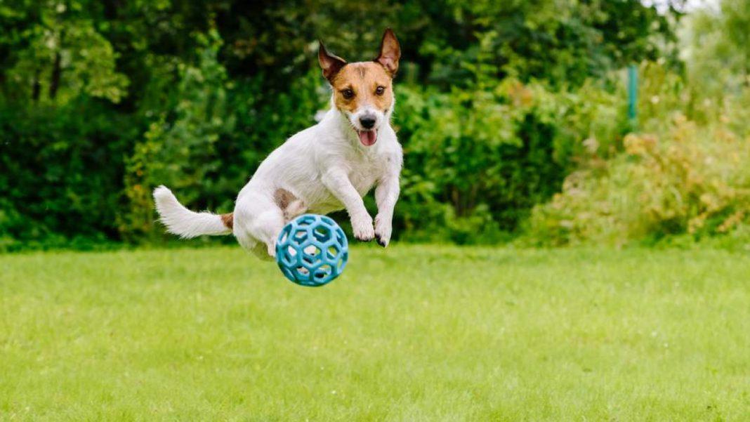 Giochi per cani: stimola la loro mente facendoli divertire